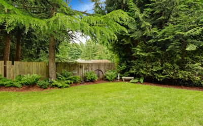 How To Landscape With Large Trees