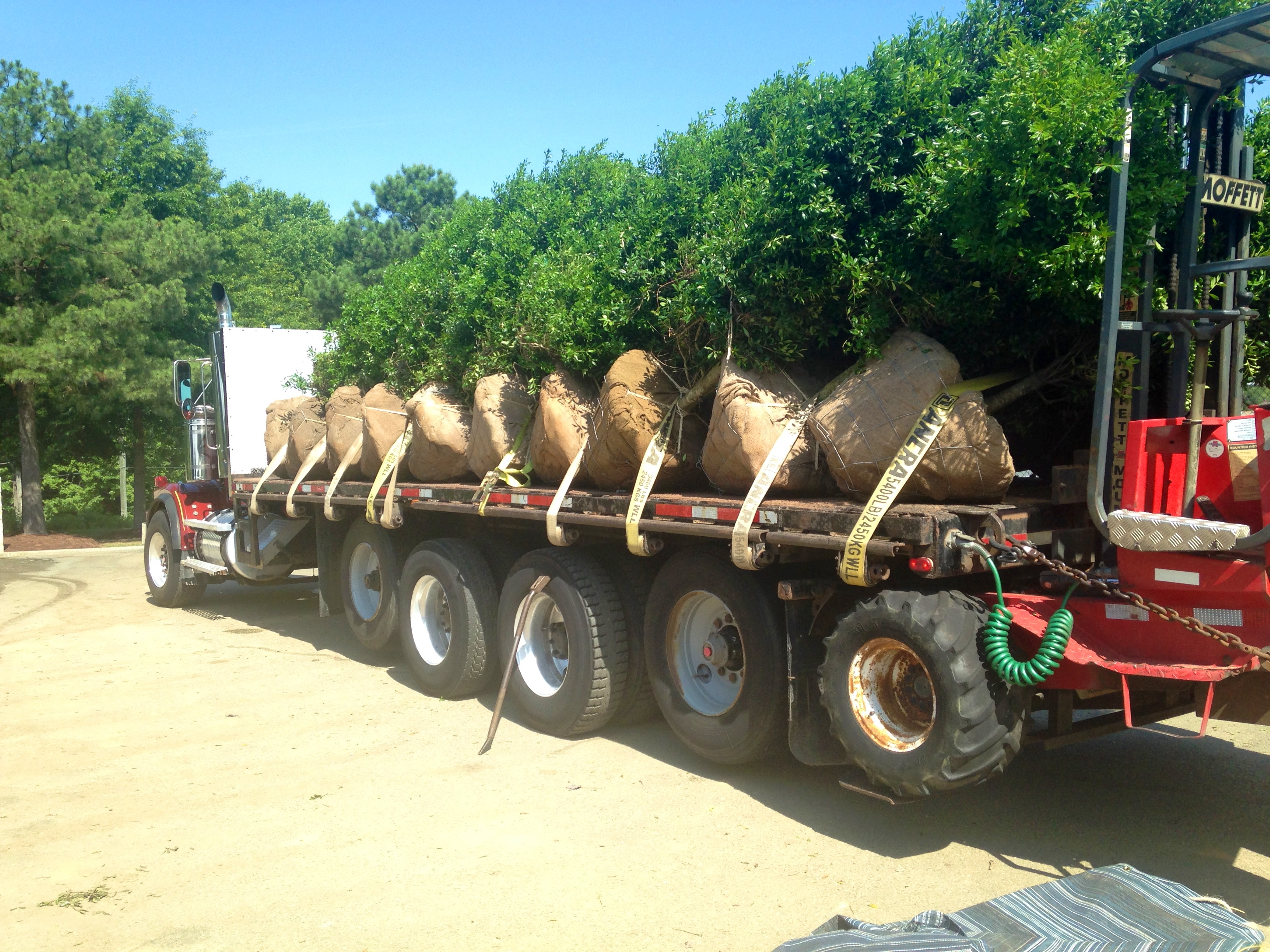 Commercial Tree Delivery & Planting