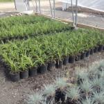 Build your garden in Gainesville.