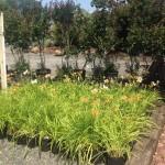 Gainesville VA Garden Center