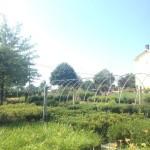 Garden Center in Gainesville