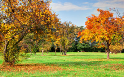 4 Ways To Set Your Lawn Up for Success This Fall