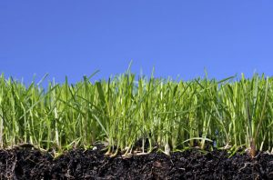 Topsoil Delivery - Top Dressing Soil For Your Lawn