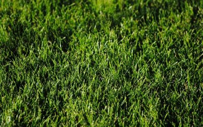 When is the Best Time to Plant Grass?