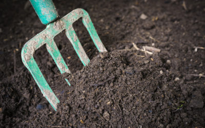 Do I Need Topsoil or Compost?